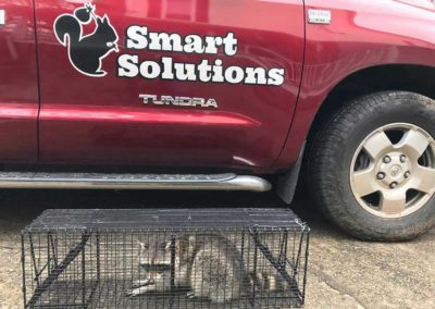 Animal-Pest-Removal-Atlanta-GA-Smart-Solutions-1