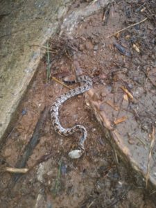 snake removal atlanta