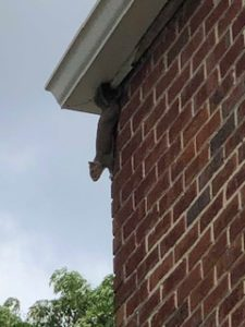 squirrels in attic Atlanta