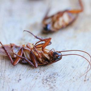 cockroach removal services in atlanta
