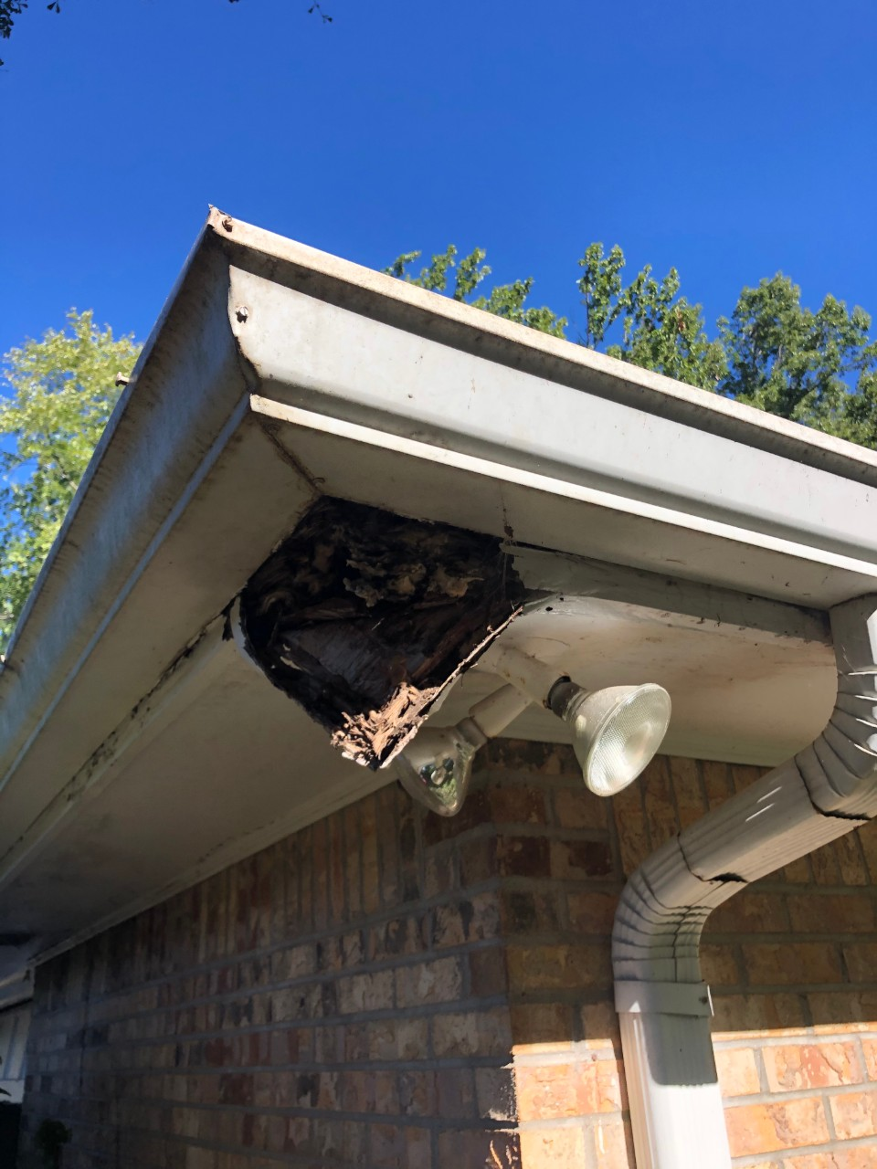 animal damage repair Buckhead