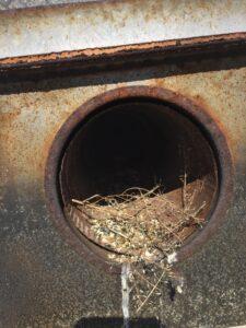 birds in vents