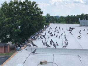 commercial bird removal Atlanta